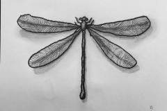 libélula-1