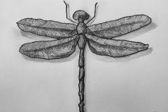 libélula-2